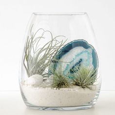 Your terrarium escape to the dazzling white sands and indigo waters of the Aegean Sea, featuring a stunning slice of blue lace agate crystal. This terrarium contains: Glass belly vase x Tillandsia airplants) Blue agate crystal White quar Mini Terrarium, Terrarium Cactus, Garden Cactus, Succulents Garden, Garden Plants, Planting Flowers, Terrarium Ideas, Cactus Flower, Terrarium Wedding