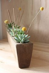 a sugar mold becomes a succulent holder