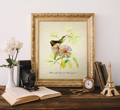 Antique Botanical Print, White bellied Emerald Hummingbird Print, Vintage Natural History Art, Decorative Hummingbird Botanical Print B034