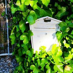 Con tanta lluvia nos han entrado ganas de meternos en el sofá, debajo de una mantita y ver Friends. ¿Alguien más con planes de otoño aunque sea primavera? 😌  . . . . . . . . . . . #andalucia #mazagon #verde #nature #correo #buzon #mailbox #narnia #green #primavera #spring #huelva #magico #magical @vagalumedesigns