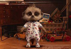 Oleg's Diary: Blog Updates From Baby Oleg | Compare the Meerkat