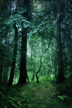 fantasy woodland art - Google Search