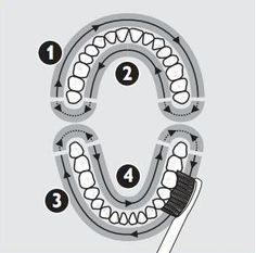 4 Mouth Quadrants