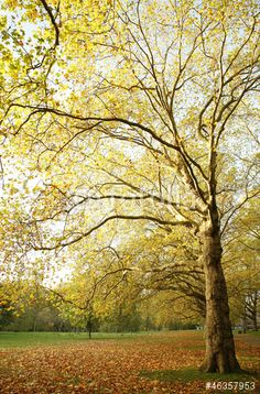 Comp image Eps Vector, Vector Art, Hd Video, Royalty Free Stock Photos, Country Roads, Autumn, Illustration, Plants, Image