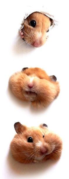awwwww hamster love
