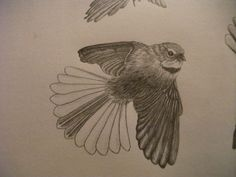 New Zealand Fantail 3 by on DeviantArt Tatoo Bird, New Zealand, Piercings, Owl, Deviantart, Tattoos, Animals, Painting, Peircings