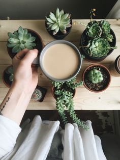 Tea and Village Plant Witch Aesthetic requested by anon - Site Title Plant Aesthetic, Witch Aesthetic, Aesthetic Green, Aesthetic Coffee, Aesthetic People, Plants Are Friends, Cactus Y Suculentas, Echeveria, Cacti And Succulents