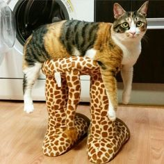 Мебель для кошек из картона Cat Home ® | ВКонтакте