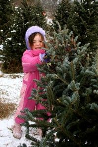 Make it a Real Michigan Christmas: Tips for finding the perfect, Michigan-grown tree.