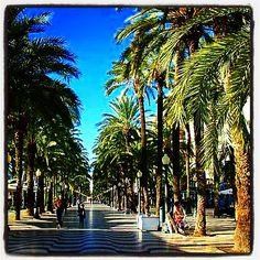 Alicante Fotográfico: Recuerdo y reconocimientos en Alicante