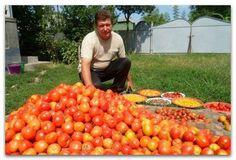 БАЛЬЗАМ ДЛЯ РОСТА ПОМИДОРОВ от садовода-огородника Владимира Андриянина В бочку насыпаем одну треть крапивы, ведро коровяка, 2 лопаты золы, 2 кг дрожжей, 3 литра сыворотки. Настаивается две недели. Затем нужно поливать под корень - и помидоры растут как на дрожжах... https://www.facebook.com/DachaSadOgorod/photos/a.241305722675939.1073741828.226462100826968/641399015999939/?type=3