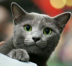 Les chats!