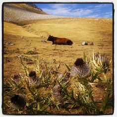 Paisaje rural de montaña asturiana