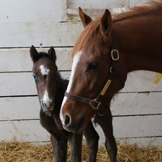 Country Life and Merryland Farms  Atlantic Rainbow - The Factor colt. March 9 at 2:57pm ·  Born 3/8 at 9:20pm