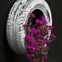 I absolutely love this. Already have the tire. I grew sweet potatoes in it last summer.
