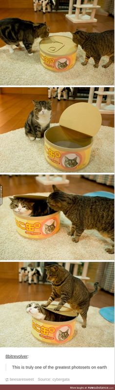 Cats and a Large Fake Tin