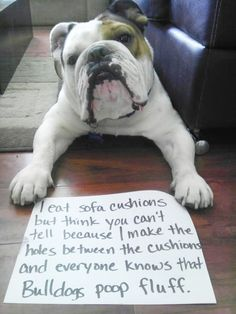 """Everyone knows Bulldogs poop fluff"" hahaha dog shaming is hilarious"
