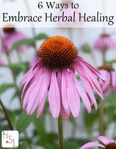 Avoid feeling overwhelmed with the sheer amount of information available with these 6 ways to embrace herbal healing at home.