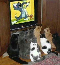 Gatos assistindo Ton e Jerry