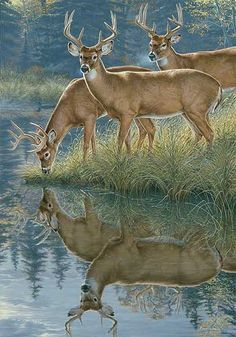 A475702565: Whitetail Morning Painting Kromschroeder