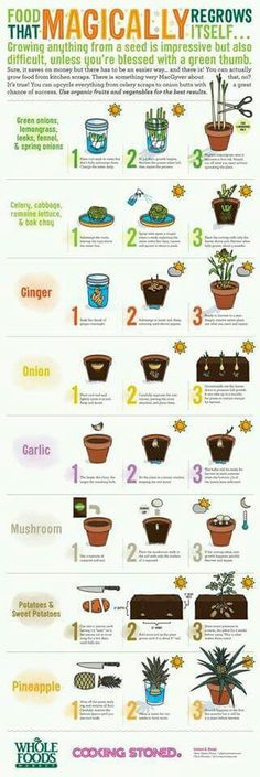 Regrow your produce!