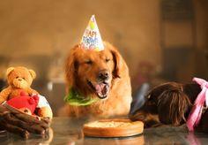 【画像】17歳の若き写真家が撮った、かわいい愛犬の写真17連発 | IRORIO(イロリオ) - 海外ニュース・国内ニュースで井戸端会議