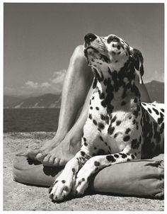 Herbert List: Homme et chien, Portofino, 1936.