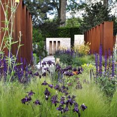 modern garden-dark flowers and flowing grasses