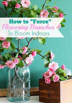 Landscaping Software - Offering Early View of Completed Project Forcing Flowering Branches To Bloom Is One Of The Easiest Ways To Bring Spring Inside Includes Easy Instructions On How And When To Cut Your Branches And Tips On Arranging Them. Gardening For Beginners, Gardening Tips, Indoor Gardening, Organic Gardening, Flower Branch, Diy Décoration, Branches, Garden Inspiration, Garden Ideas