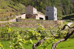 the clients, who are wine producers themselves, wanted to restore the site to its former glory in order to develop an agricultural resort.