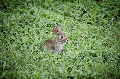 Photo By Davies_Designs | Pixabay   #babybunny #babyrabbit #bunny #rabbitsofinstagram #rabbits #rabbitsworldwide #rabbitsunited #rabbitsoftheworld #rabbitsrule