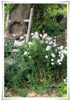 Perfect Nice use of ladder Cottage GardenGarden