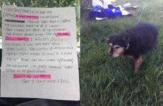 Cette chienne vieillissante a été abandonnée dans un champ, avec un message cruel : «Je n'ai pas besoin d'un chien».