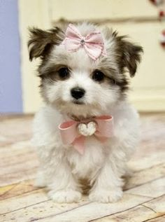 This is the one thing that makes me think I need a puppy...tiny, furry, cuteness.