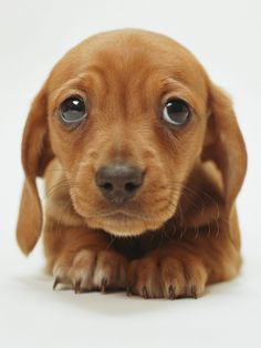 PetSutra - Dog's Bones are not Healthy - Puppy with Sad Eyes