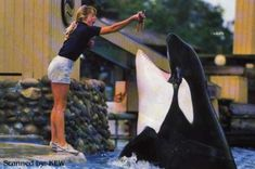 Kandu mother of Orkid. She would die a horrific death less than a year after her daughter's birth. Animals And Pets, Funny Animals, Husky Names, Killer Whales, Sea World, Marine Life, Free Willy, Dream Job, Beautiful