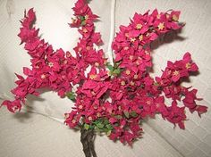how to: bougainvillea