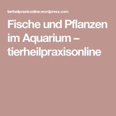 Fische und Pflanzen im Aquarium – tierheilpraxisonline