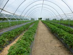 Greenhouse farming is nothing alien to most farmers. This farming technology has been around for many decades but, its adoption has been…