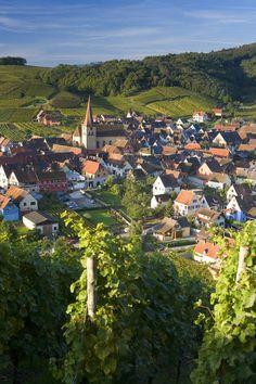 vineyards, Niedermorschwihr, Alsace, France. Photo: Jon Arnold Images, Peter Adams