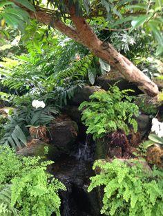Tropical Garden                                                                                                                                                                                 More