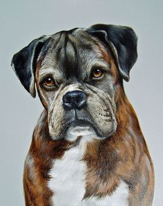 Oil Painting For Sale Animal Paintings, Animal Drawings, Boxer Puppies, Labrador Puppies, Retriever Puppies, Dog Artist, Dog Died, Dog Portraits, Dog Pictures