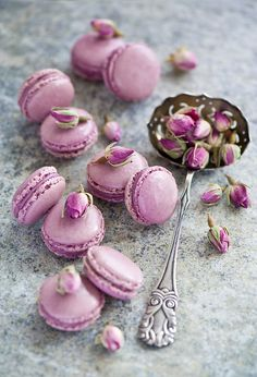 Lavender macarons, pretty, just wish I enjoyed these as much as they are popular. Macarons just don't pack a dessert punch. Lavender Macarons, Pink Macaroons, French Macaroons, Lavender Honey, Lavander, Drying Lavender, Cupcakes, Pretty Pastel, Pastel Pink
