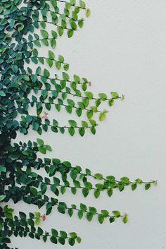 climbing vines | garden | greenery | simplistic