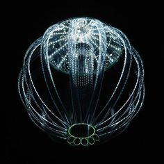 Deep sea creature. Wow! Amazing how a simple creature can do things we can just dream about.