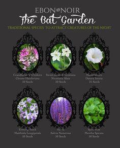 The Bat Garden, A Collection of Seeds to Attract Creatures . The Bat Garden, A Collection of Seeds Witchy Garden, Gothic Garden, Victorian Gothic Decor, Moon Garden, Dream Garden, Garden Plants, House Plants, Potager Bio, Permaculture