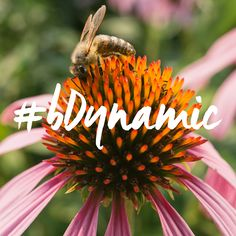 Let's #bDynamic at #ExpoWest! Live life as it was meant to be lived. Totally cosmic. Totally amazing. Totally #biodynamic. #biodynamictonics