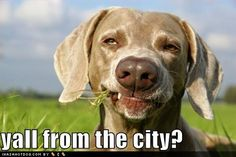 Y'all From The City? #country #dog #funny #lol #laugh