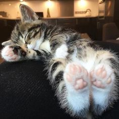 These cute kittens will brighten your day. Cats are incredible friends. Cute Cats And Kittens, Baby Cats, Kittens Cutest, Cutest Pets, Fluffy Kittens, Ragdoll Kittens, Bengal Cats, Fluffy Cat, Pretty Cats