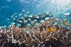 16 Best Snorkeling in the World - Menjangan Island, Bali